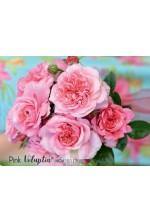 Décorosier 'Pink Voluptia'®