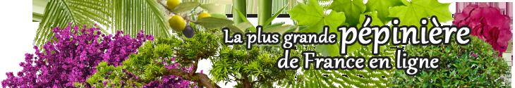 Vente de plantes de jardin en ligne